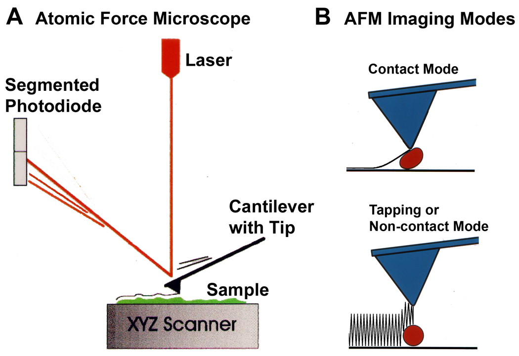 afm contact non thesis What is phase imaging print email there is some confusion about phase imaging it is carried out in intermittent contact mode (ic-afm) in commercial afms depending on the instrument, ic-afm may be referred to as ac-afm, vibrating mode, tapping, etc.
